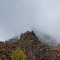 Туман :: Яна Старковская