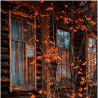 Рябина у окна. :: Алексей Хаустов