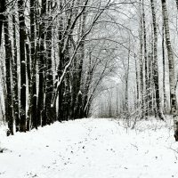 Скупые зимние краски природы :: Милешкин Владимир Алексеевич