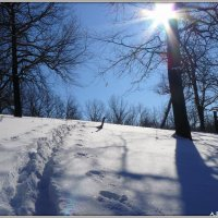 На лыжных тропинках :: Андрей Заломленков