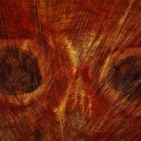 Взгляд из сердца дерева :: Сергей Чиняев