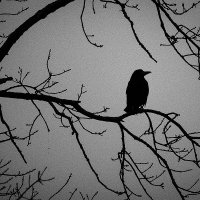 Тени на сером небе :: Валерий Чернов