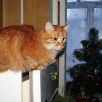 Фотография о том, как Персик не пустил ёлку на своё место :: Елена Федотова