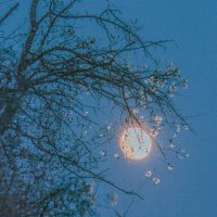 луна :: сергей пейкер