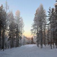 Зимние прогулки :: Ольга