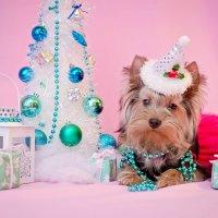 Новогодняя Милка :: Катерина Терновая