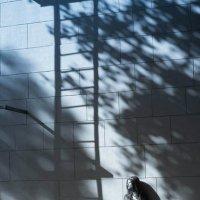 в тени города... :: Вероника Ходаренок