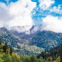 Аотльйские луга в Абхазии :: Валерий Смирнов