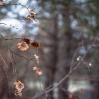 """Держи-дерево """"христова колючка"""" :: Марина_1975 -"""