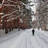 По лесной тропинке :: Николай Белавин