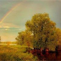 Чернолучье :: Владимир Сидоркин