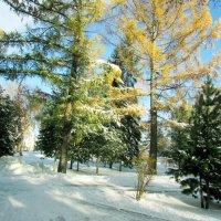 Ах, ты зимушка, зима,.. :: раиса Орловская