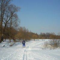 На лыжах. :: Александр Атаулин