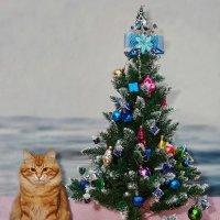 Рыжий кот и ёлка. Новый год :: Юрий Слюньков
