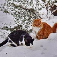 Первый  в  жизни  снег... :: Валера39 Василевский.
