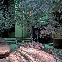 Утром к нам пришла зима. :: Elena Izotova