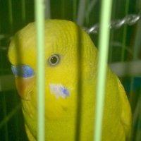 мой попугай :: данющенко мария