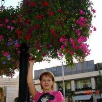 Цветущие деревья Лос-Анджелеса. :: Владимир Смольников