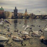 Прага(Чехия) :: Константин Король