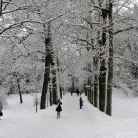 Зима в Павловском парке. :: ТАТЬЯНА (tatik)