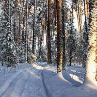 Радуется снегу колея... :: Лесо-Вед (Баранов)