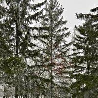 Зимние зарисовки 14 :: Алексей Масалов