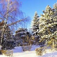 Зима в Шахтах :: Владимир Болдырев