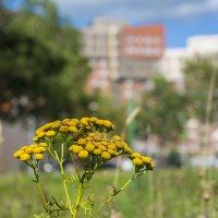 Городские цветы :: Сергей Егоров