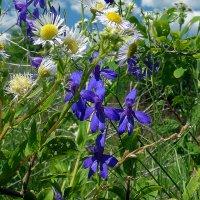 Цветение луговых трав. :: Валерий Изотов