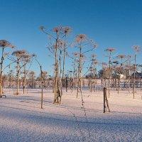 Мороз и солнце :: Николай Белавин