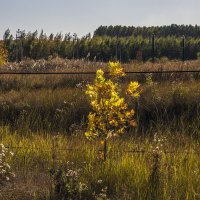 Золотая осень :: Юрий Клишин