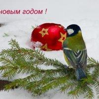Счастливого Нового года! :: Ната Волга