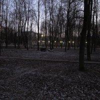 Новогодний вечер в парке городском. :: Sergey Serebrykov