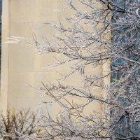 Ледяное дерево перед церковью :: MVMarina