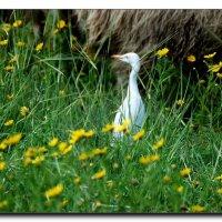 В высокой траве. :: Leonid Korenfeld