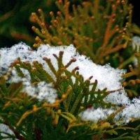 первый снег :: Александр Корчемный