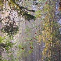 Рассвет в лесу :: Сергей Чиняев