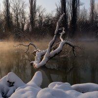 Утро 1 января :: Александр Плеханов
