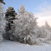 Белая зима... :: Ольга