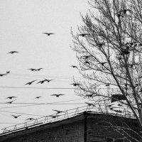 Зима :: Светлана -