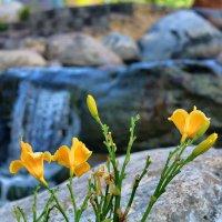 Цветы, камни, вода... :: Сергей Егоров