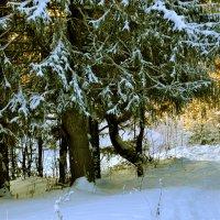 елки :: petyxov петухов