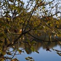 Красивая осень ... :: Ольга Винницкая