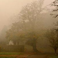 Осень в тумане :: Анна Браун