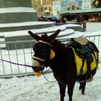 Ослик на ярмарке в Питере! :: Светлана Калмыкова