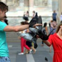 Любовь и голуби :: Юрий Налобин