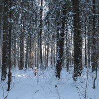 Зимний лес. :: Наталья