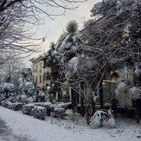 В Сочи наступила зима :: Tata Wolf