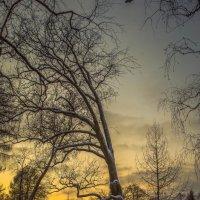 зима... :: Рома Григорьев
