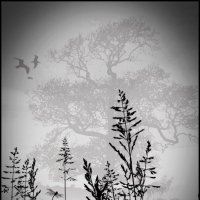 Туман :: Ольга Симонова